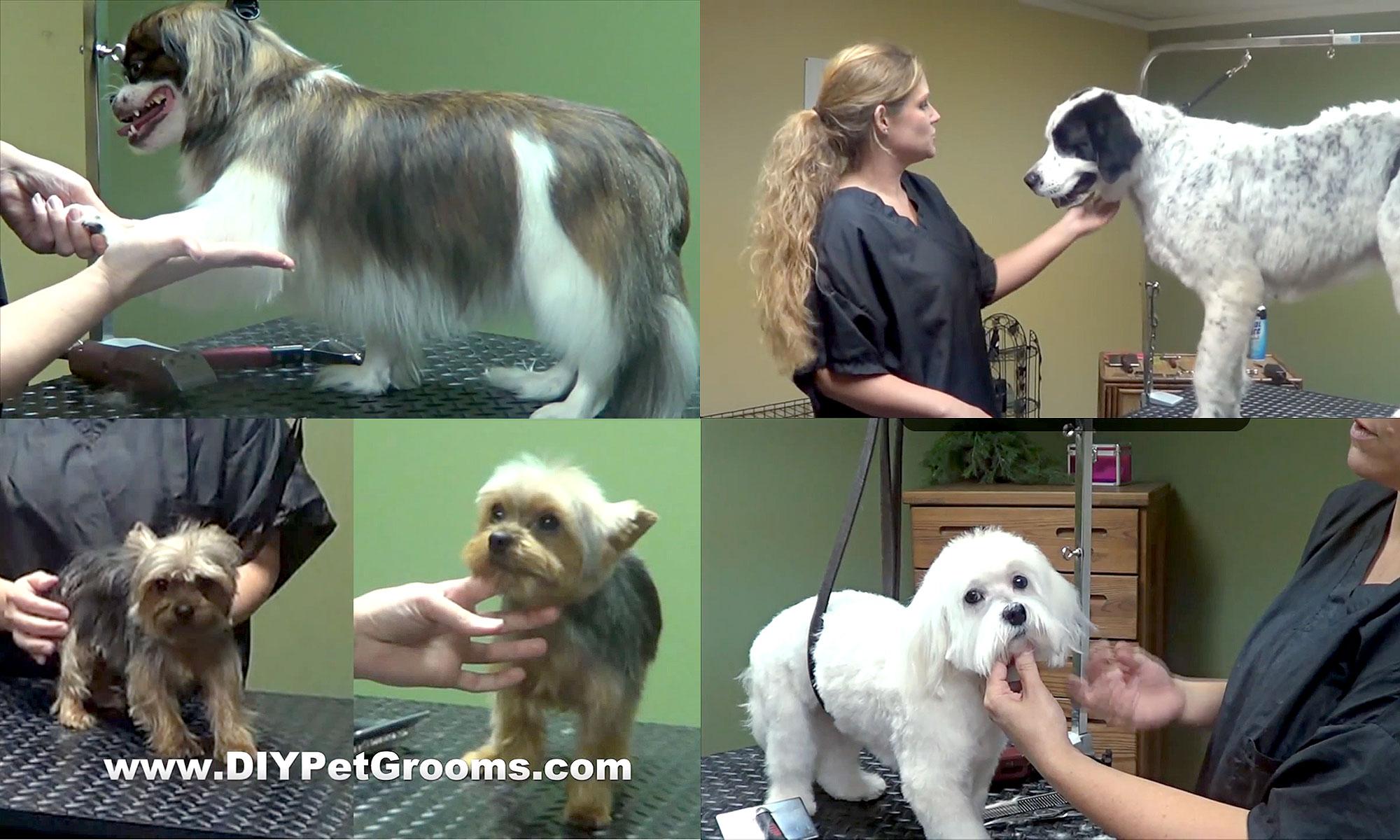 DIY Pet Grooms - dog grooming videos